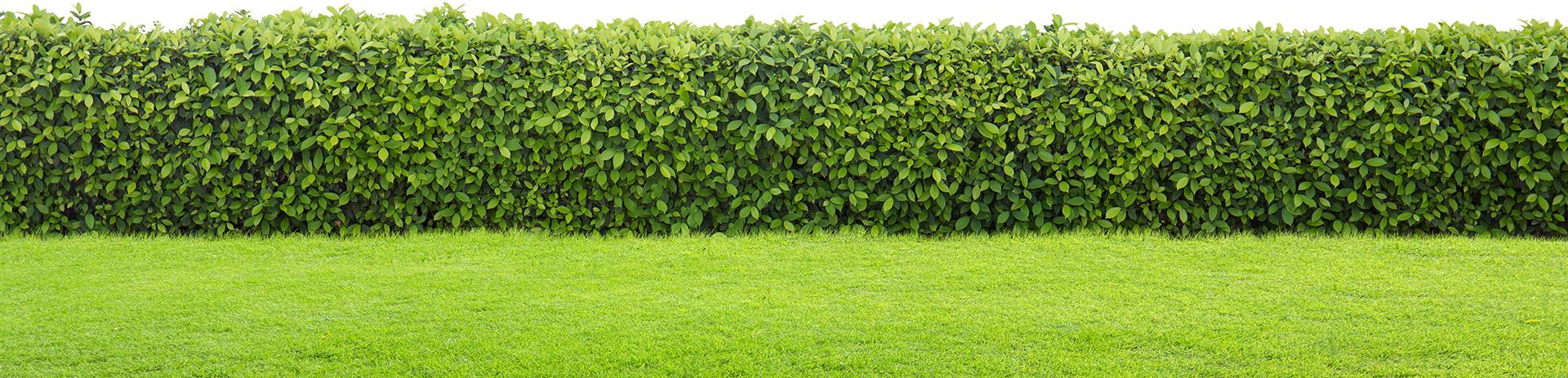 Tuinen Juwet, Maarten Juwet, tuinaanleg, tuinonderhoud