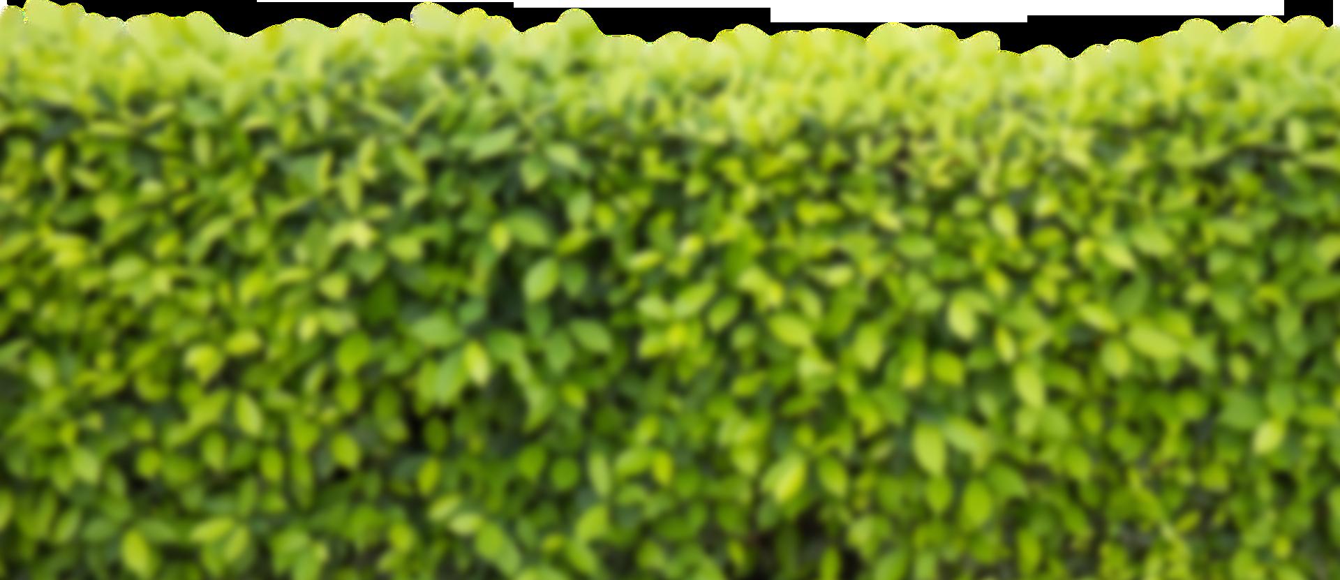 Tuinen Juwet, tuinaanleg, tuinonderhoud