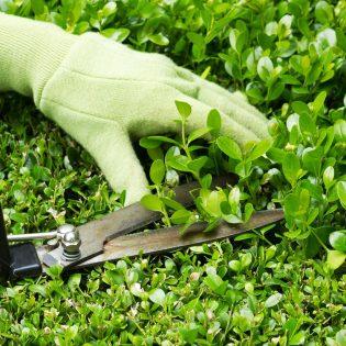 tuinaanleg, tuinonderhoud, tuinwerken