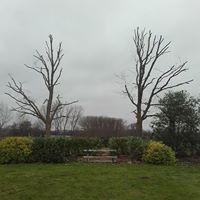 snoeien-vellen-bomen